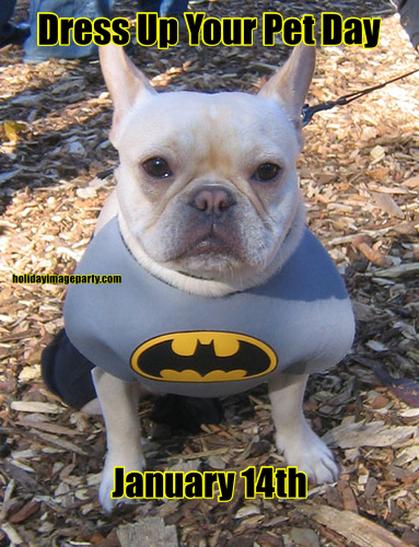 Dress Up Your Pet Day January 14th
