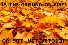 Is the ground on fire?       or is it just October?