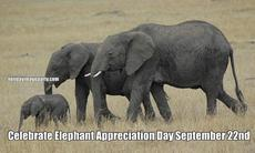 Celebrate Elephant Appreciation Day September 22nd