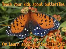Teach your kids about butterflies On Learn about Butterflies Day
