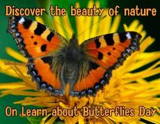 Discover the beauty of nature  On Learn about Butterflies Day