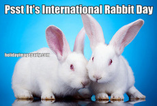 Psst It's International Rabbit Day