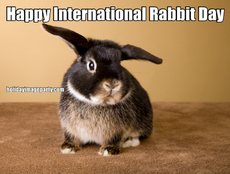 Happy International Rabbit Day