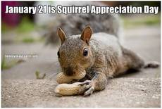 January 21 is Squirrel Appreciation Day