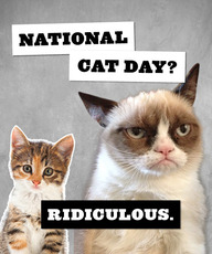 National Cat Day Ridiculous