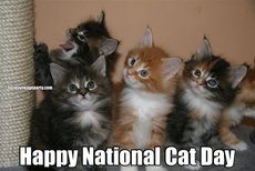 Happy National Cat Day