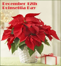 December 12th Poinsettia Day