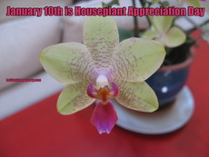 January 10th is Houseplant Appreciation Day