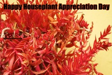 Happy Houseplant Appreciation Day