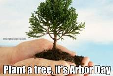 Plant a tree, it's Arbor Day