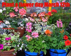 Plant a flower day March 12th