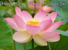 March 12th is Plant A Flower Day
