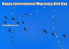 Happy International Migratory Bird Day