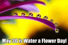 May 30 is Water a Flower Day!