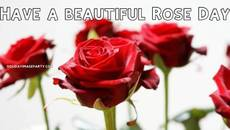 Have a beautiful Rose Day