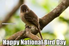 Happy National Bird Day