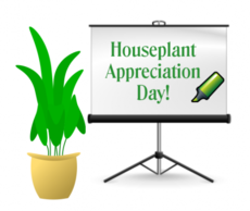 Houseplant Appreciation Day