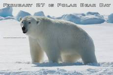 Ferubary 27 is Polar Bear Day
