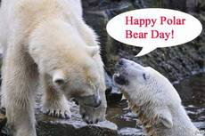 Happy Polar Bear Day!