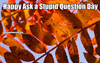 Category Ask a Stupid Question Day