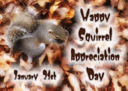 Happy Squirrel Appreciation Day January 21st