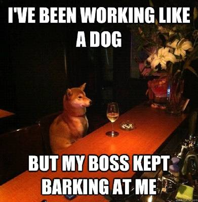 I've been working like a dog but my boss kept barking at me