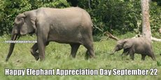 Happy Elephant Appreciation Day September 22