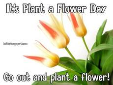 It's Plant a Flower Day Go out and plant a flower!