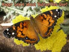 Happy Learn about Butterflies Day!