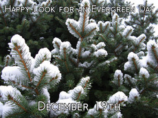 Happy Look for an Evergreen Day December 19th