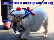 January 14th is Dress Up Your Pet Day