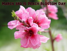 March 3rd is Peach Blossom Day