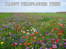 Happy Wildflower Week