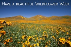 Have a beautiful Wildflower Week