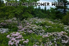 Enjoy Wildflower Week