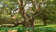 May 16th is Love a Tree Day
