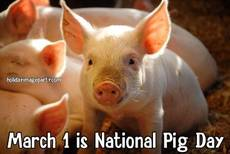 March 1 is National Pig Day