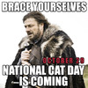 Search national cat day